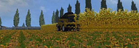 gold-maize