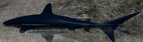 Shark v 1.0