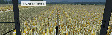corn-in-rows