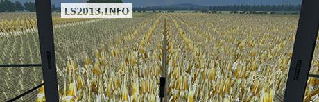 corn-in-rows