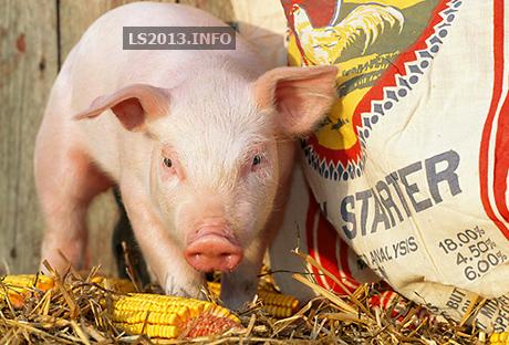 pigs mod