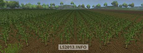Maize-Texture-v-1.0