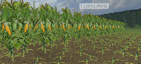 Maize-Texture-v-3.0