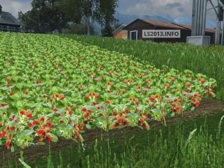Strawberry-Texture-v-1.0