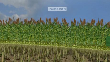 Sudan Grass Texture v 1.0
